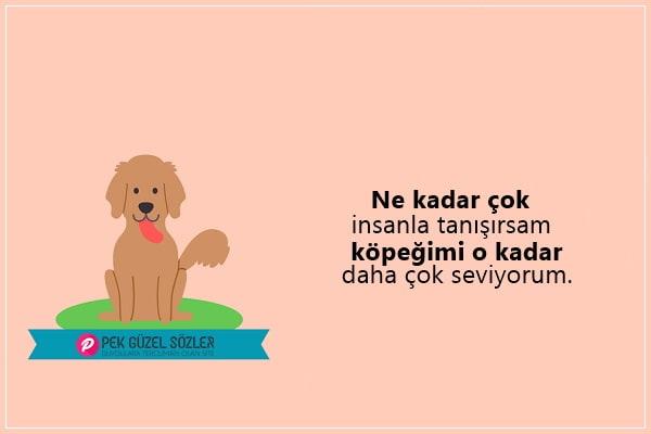 Köpeklerle İlgili Sözler