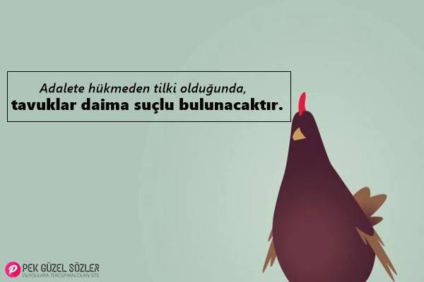 Tavuk İle İlgili Sözler